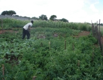 Food garden linked to ZACF-PMCP anarchist project, Motsoaledi squatter camp, Soweto, 2007 [1]