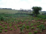 Food garden linked to ZACF-PMCP anarchist project, Motsoaledi squatter camp, Soweto, 2007 [3]