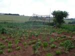 Food garden linked to ZACF-PMCP anarchist project, Motsoaledi squatter camp, Soweto, 2007 [3]